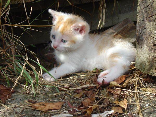 photo : chaton