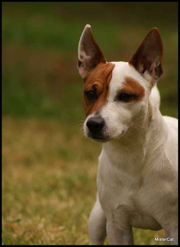 Dayla, Cooper et Lili, les chiens de julie