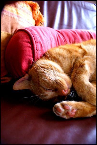 Photo © *٭* .Mister.Cat. *٭*