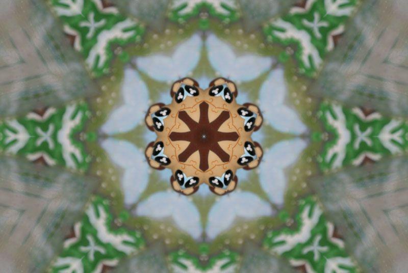 mandala-kaleidoscope-photofarfouille-petshop