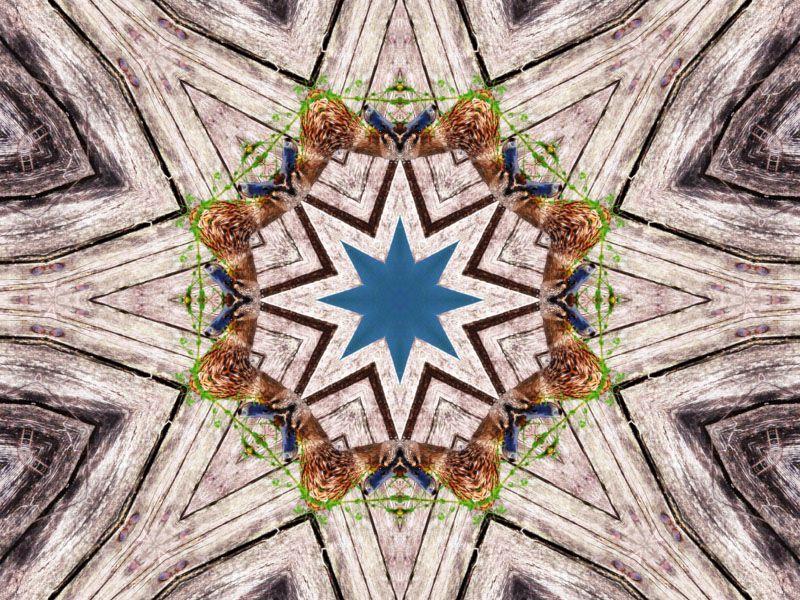 mandala-kaleidoscope-photofarfouille-canard