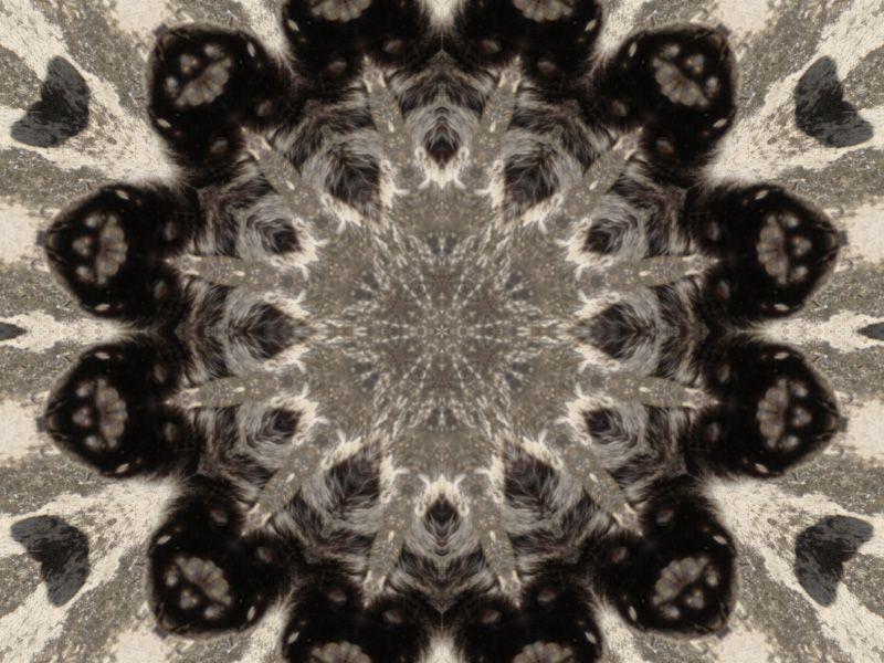 mandala-photofarfouille