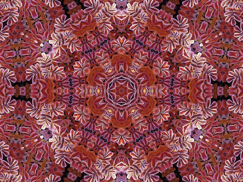 mandala-image-photofarfouille-couleur