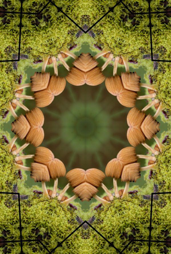 champignons-miroir-photofarfouille