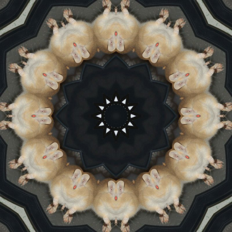 image-miroir-gerbilles-photofarfouille