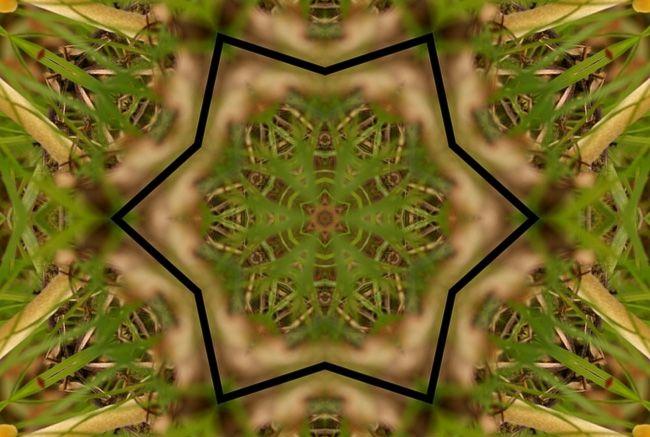 champignons-miroir