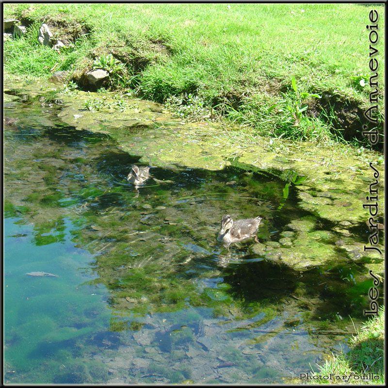 photo jardins annevoie juillet photofarfouille