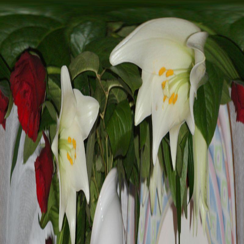variation-1-rose-rouge-lys-blanc
