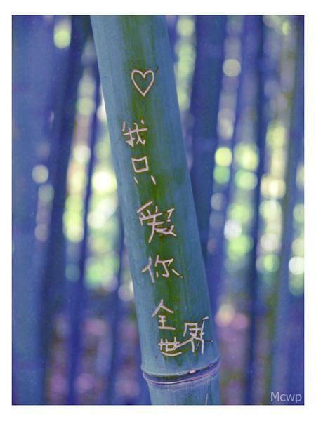 bambou-M.jpg