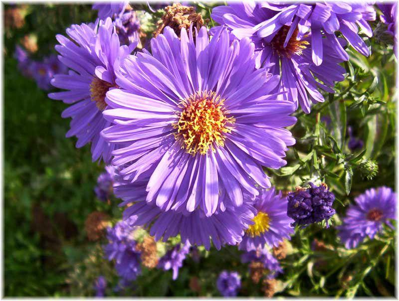 Album - Photos du jardin