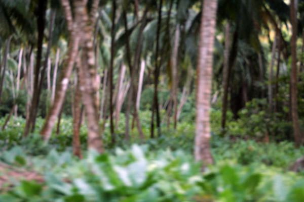dominique palmiers
