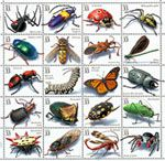 Planche insectes