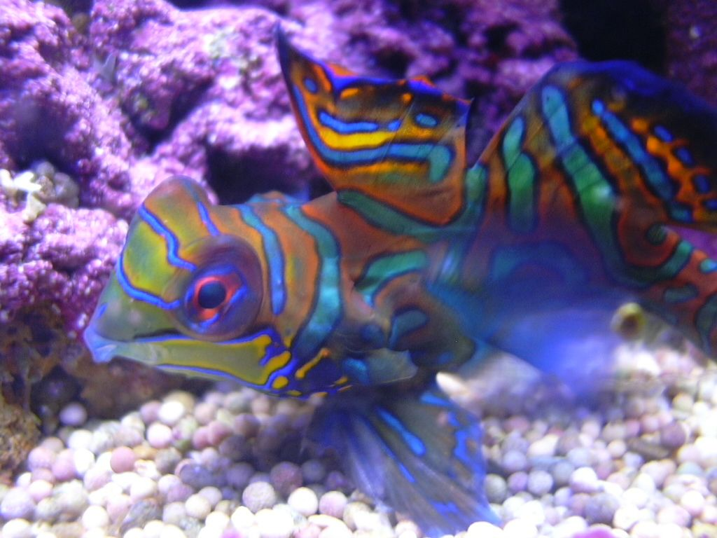 photos 1024x768 aquarium - photo #19