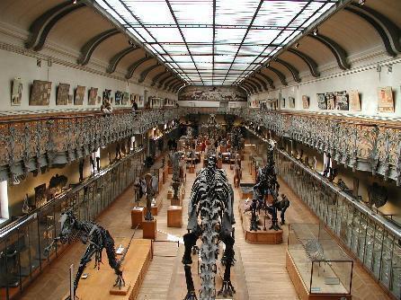 la-disparition-des-dinosaures-liee-a-leurs-oeufs