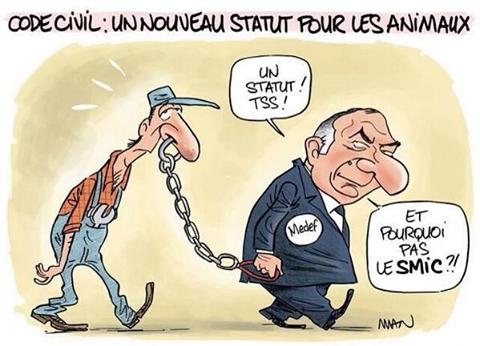 Caricature-code-civil-nouveau-statut-animaux.png