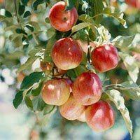 arbres_fruitiers.jpg