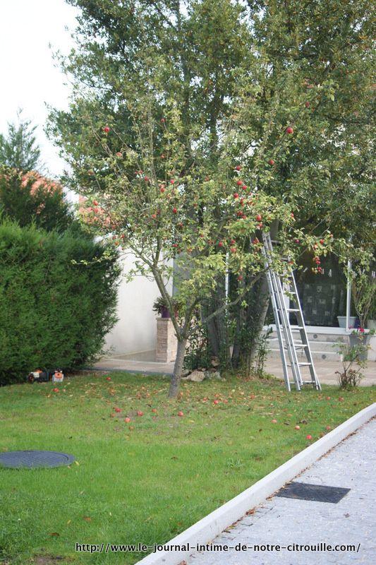 avant-jardin-4