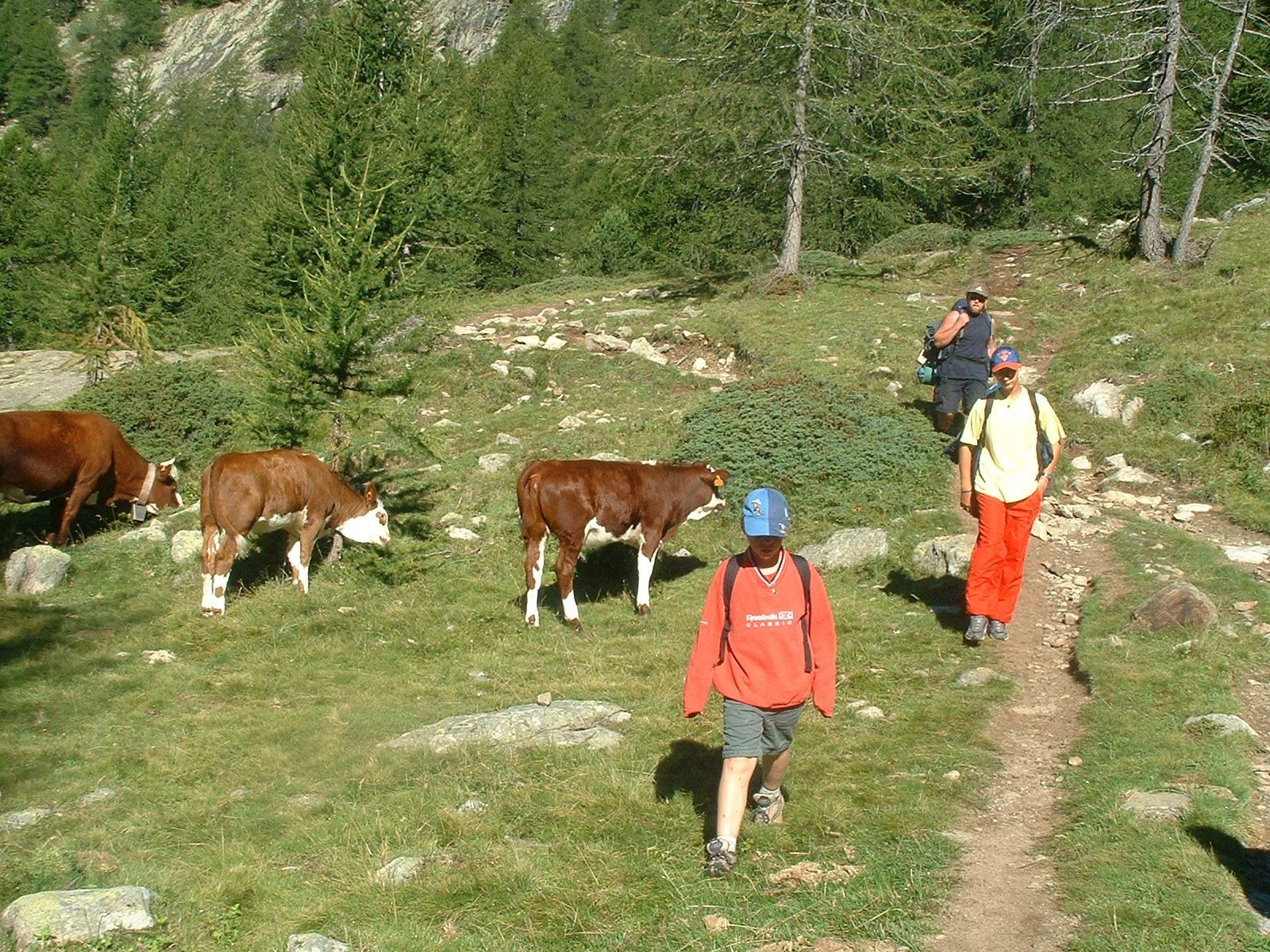 Photo activites nature - rencontre ados et vaches mercantour