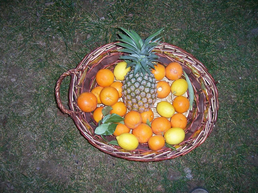 Photo fruits - oranges citrons et ananas