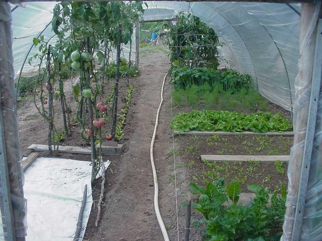 Photo patrimoine agricole - culture sous serre artisanale