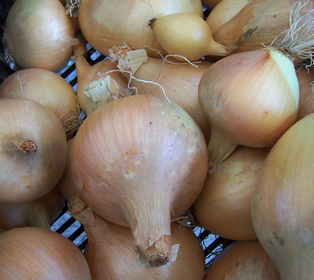 Photos plantes du jardin : oignons