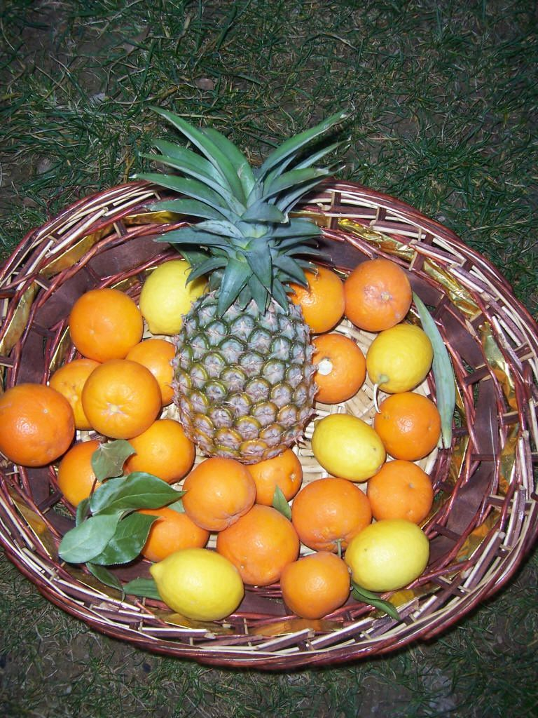 Photos plantes du jardin : oranges citrons ananas jardinage