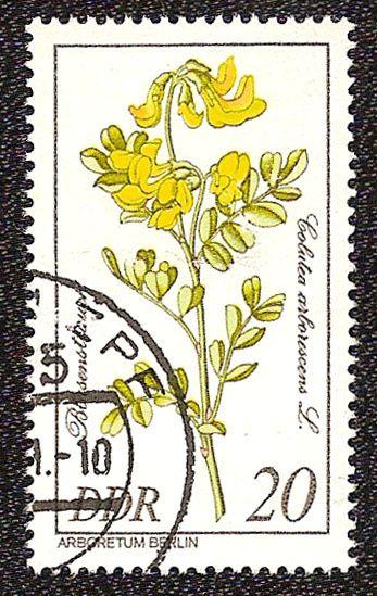 Timbre nature : colutea arborescens timbre allemagne de l est