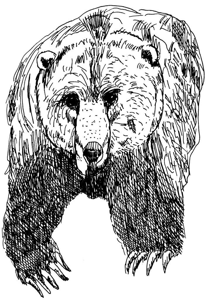 Dessin-coloriage animal : ours grizzli