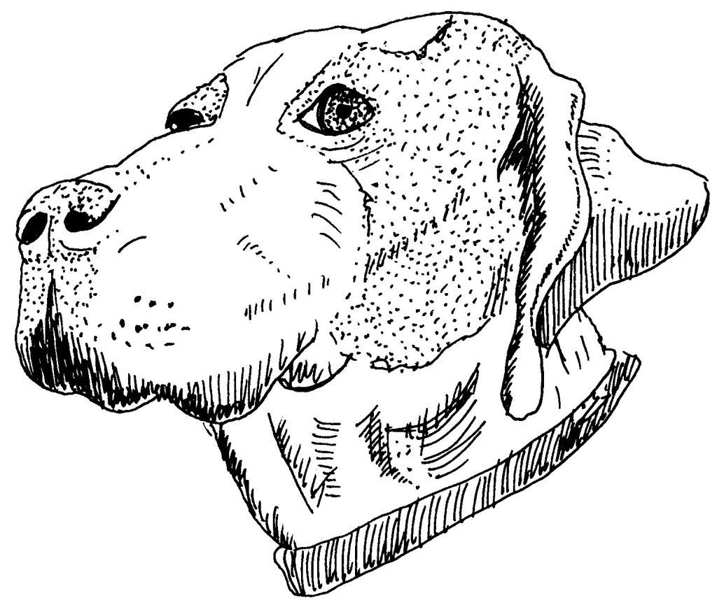 Dessin Coloriage Animal Tete De Chien A Collier