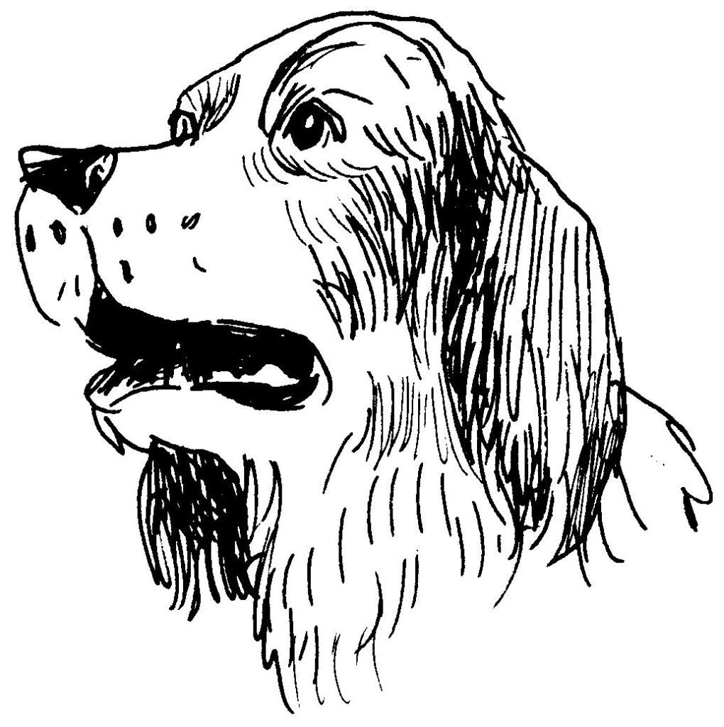 Dessin Coloriage Animal Tete De Chien Animal Familier
