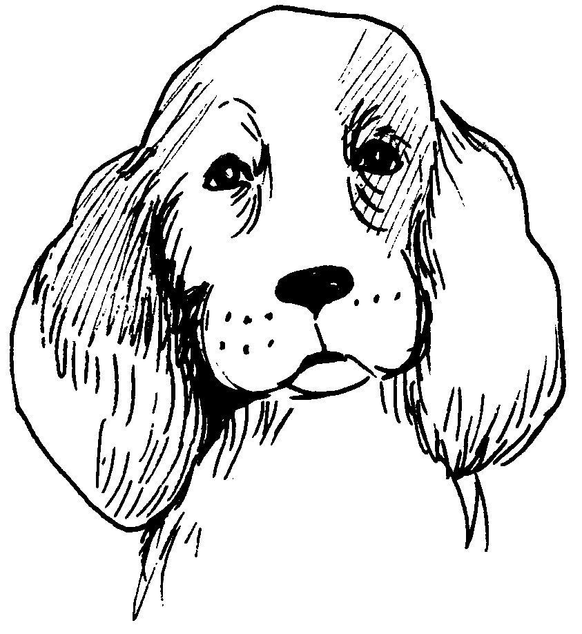 Dessin Coloriage Animal Tete De Chien Ou Chiot Animal De