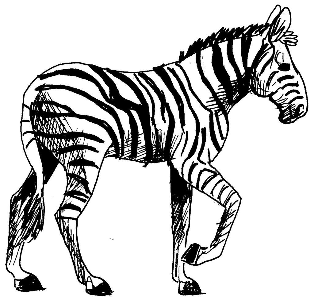 Dessin-coloriage animal : zebre