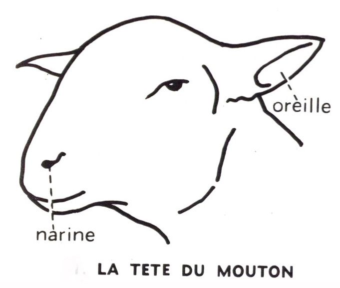 Dessin cole primaire mouton t te education - Dessin tete de mouton ...