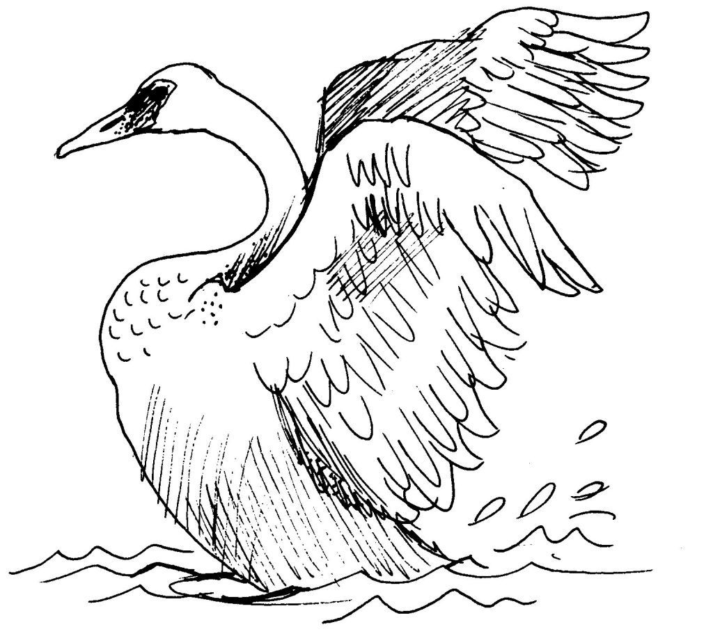 Dessin coloriage animal cygne education environnement - Dessins animaux ...