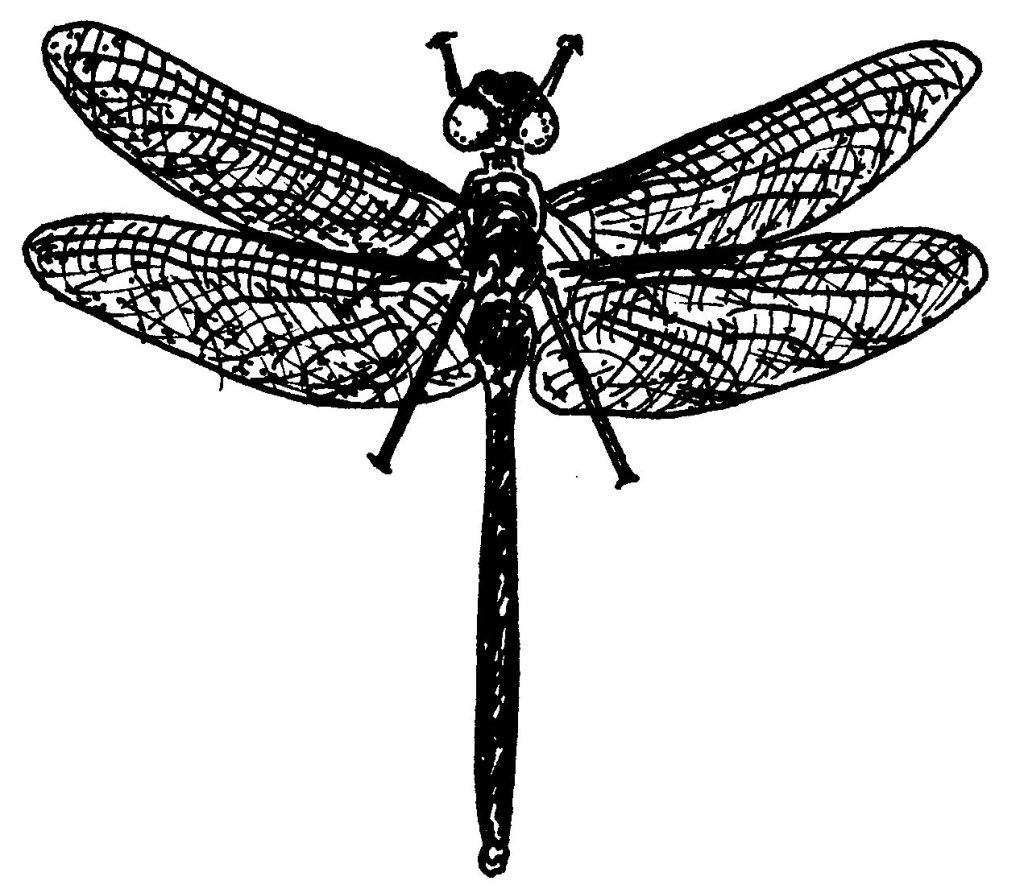 Dessin coloriage animal grande libellule education - Libellule dessin ...