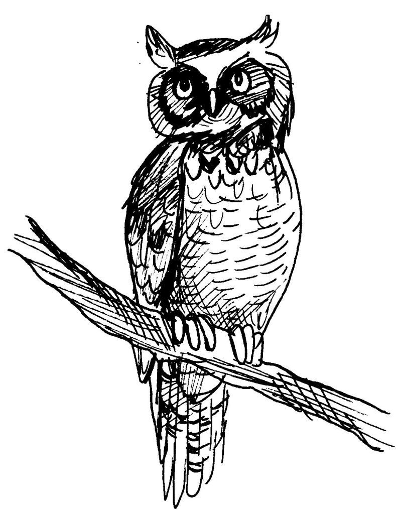 Coloriages dessins education environnement nature - Dessins hibou ...