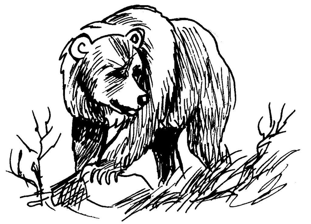 Dessin coloriage animal ours education environnement - Ours a dessiner ...