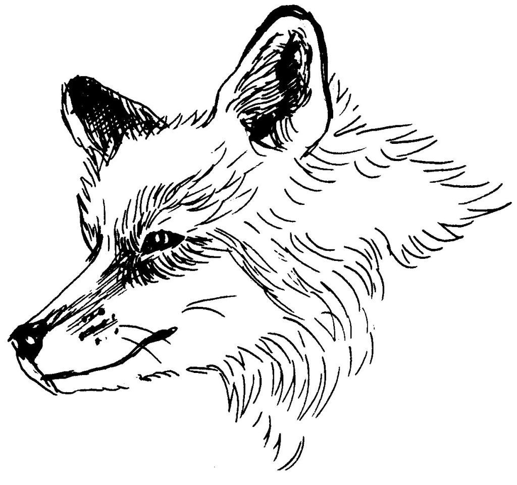 Dessin coloriage animal renard education environnement - Renard a colorier ...
