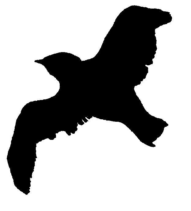 Dessin-coloriage animal : silhouette d'oiseau en vol