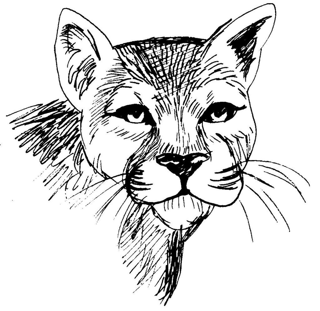 Dessin coloriage animal tete de felin cougar education - Dessin animaux ...