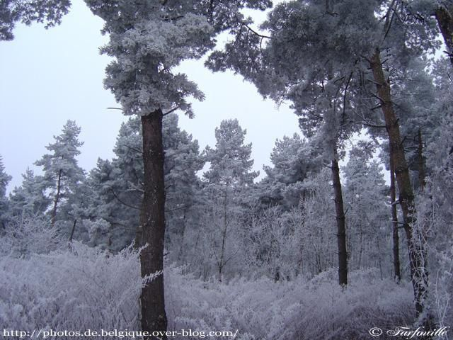 Photo : campagne-marly-hiver-3.jpg