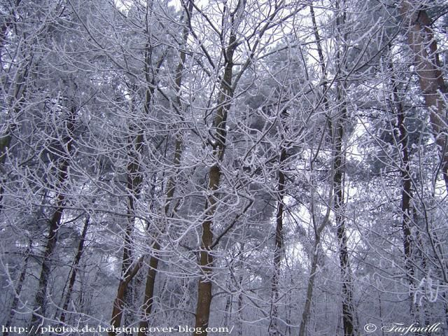 Photo : campagne-marly-hiver-4.jpg