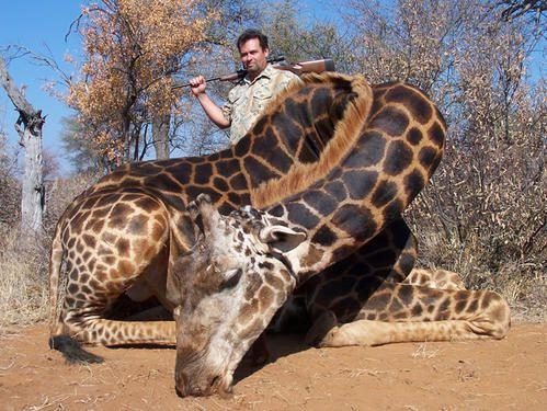 giraffe-6.jpg