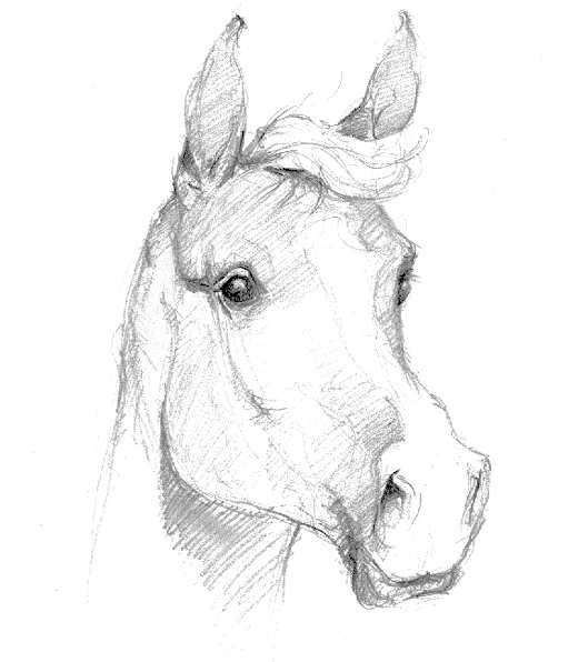Dessin de cheval art passion dessins illustrations et - Dessin facile d animaux ...