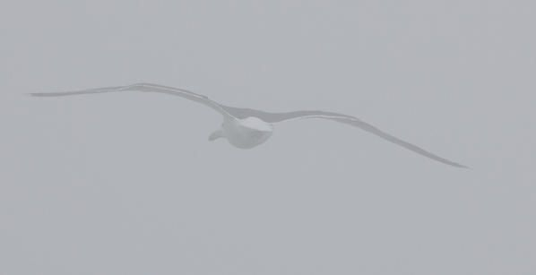 Flight-in-fog--2-.jpg