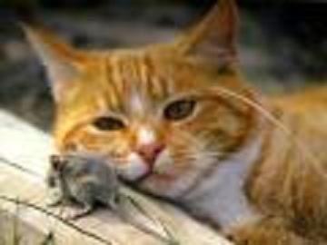 Les chats terribles pr dateurs de souris 2 lola - Photo de chat rigolo ...