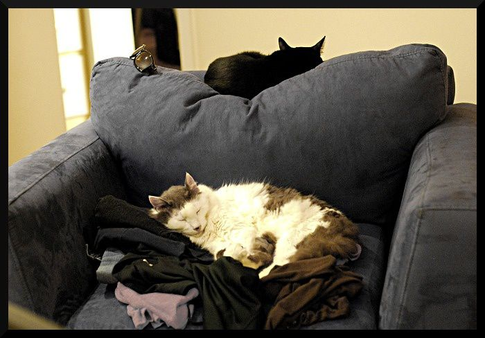 cats-on-the-couch.JPG