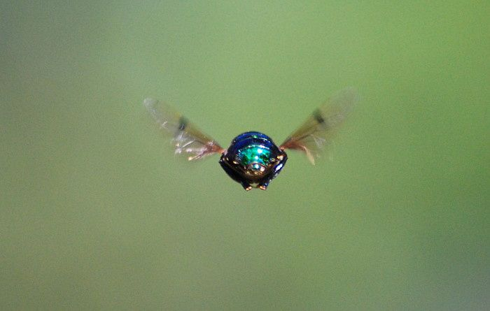 syrphid-stationary