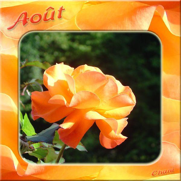 Fleur D Aout Chani