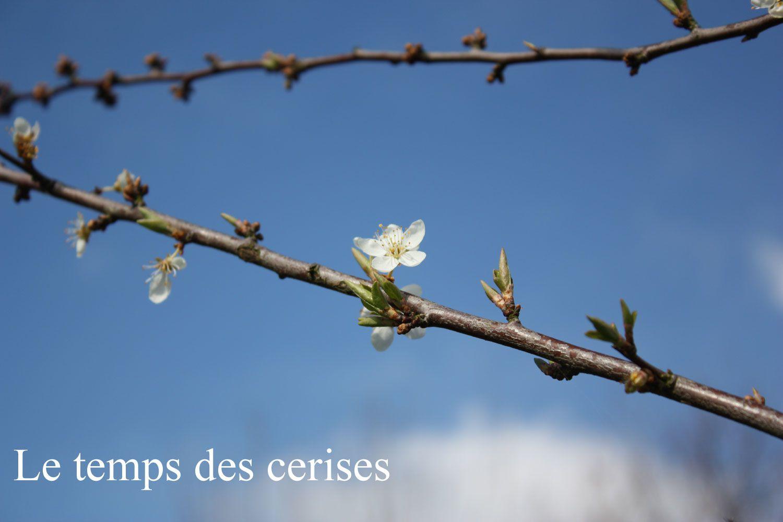 20-mars-printemps-0290.jpg
